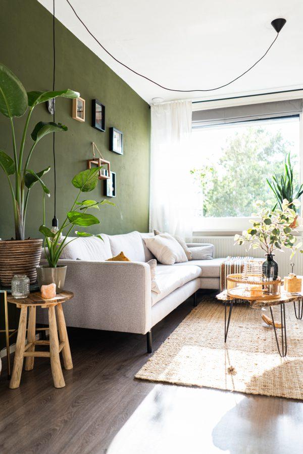 Choosing The Best Indoor Plant